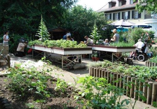Die Wildkräuter im Garten der Villa