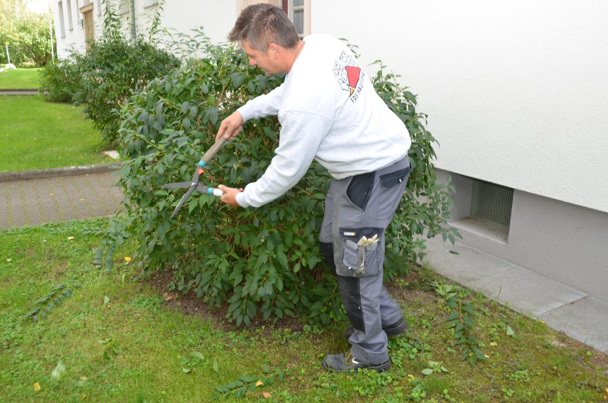 Rafal Dudek bei der Arbeit: Er schneidet eine Hecke mit der Heckenschere.