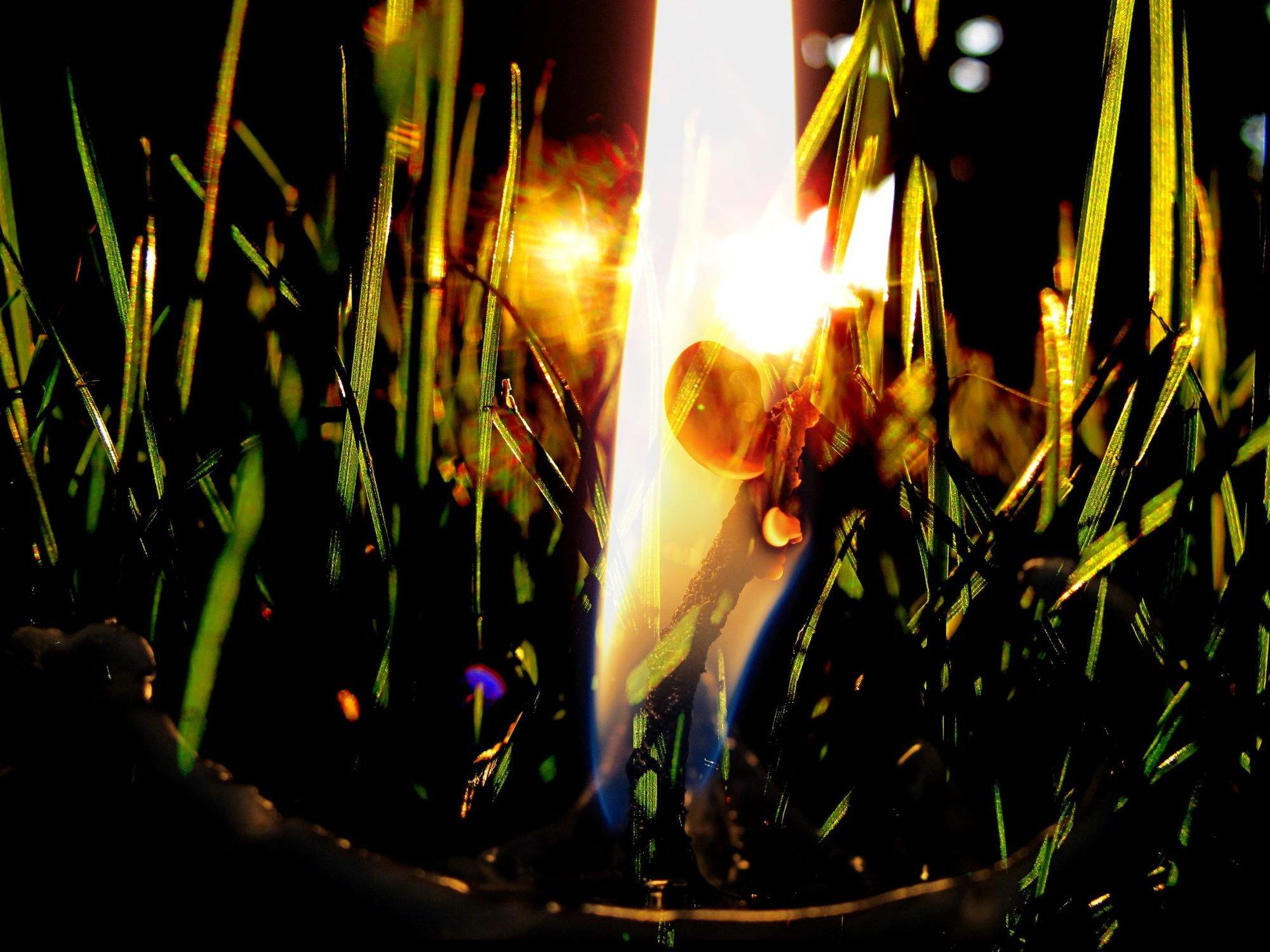 Farbfotografie: in Nahaufnahme gleißendes Sonnenlicht durch ein Büschel Gras