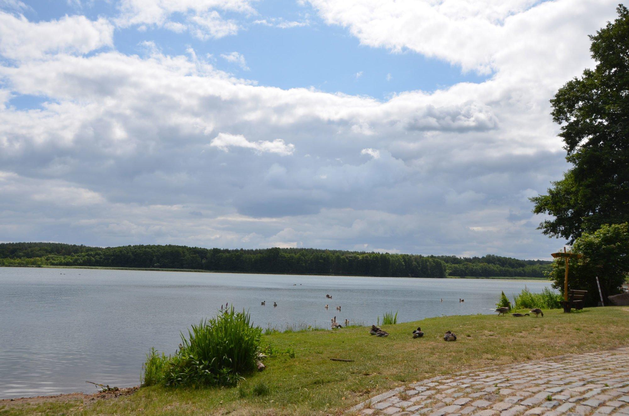 Im Vordergrund ein Weg aus Kopfsteinpflaster, dahinter Wiese, auf der Enten und Gänse sitzen und stehen. Dahinter der See und darüber blauer Himmel mit Wolken.