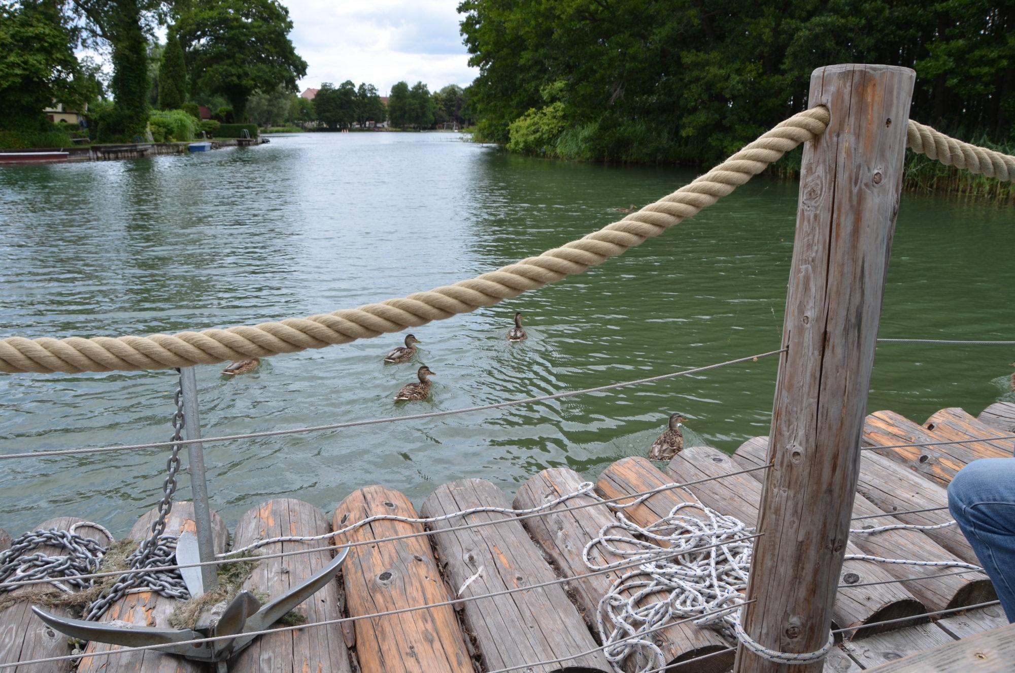 Eine Gruppe Enten schwimmt direkt vor dem Floß her.