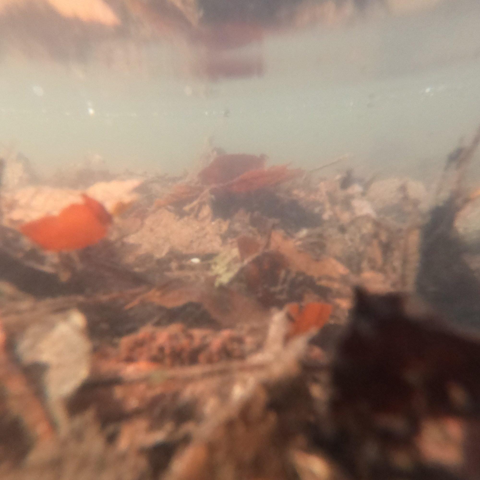 Eine verschwommene Unterwasserfotografie mit Laub, dass beinahe aussieht wie eine Berglandschaft unter Wasser,