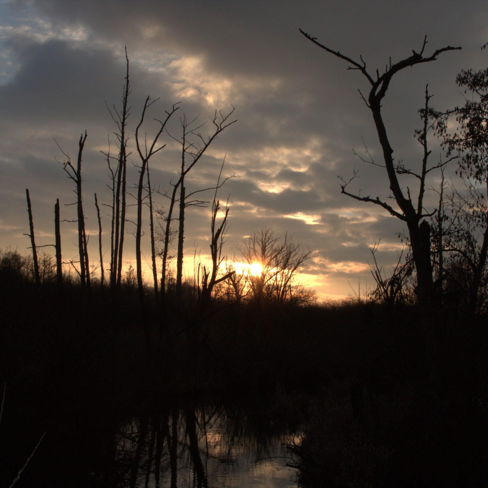 Eine Fotografie kurz vor Sonnenuntergang. Im Vordergrund durch den Schatten dunkle Gräser, kahle Bäume und ein kleiner Teich. AM Horizont die letzten Sonnenstrahlen und ein wolkenbedeckter Himmel.
