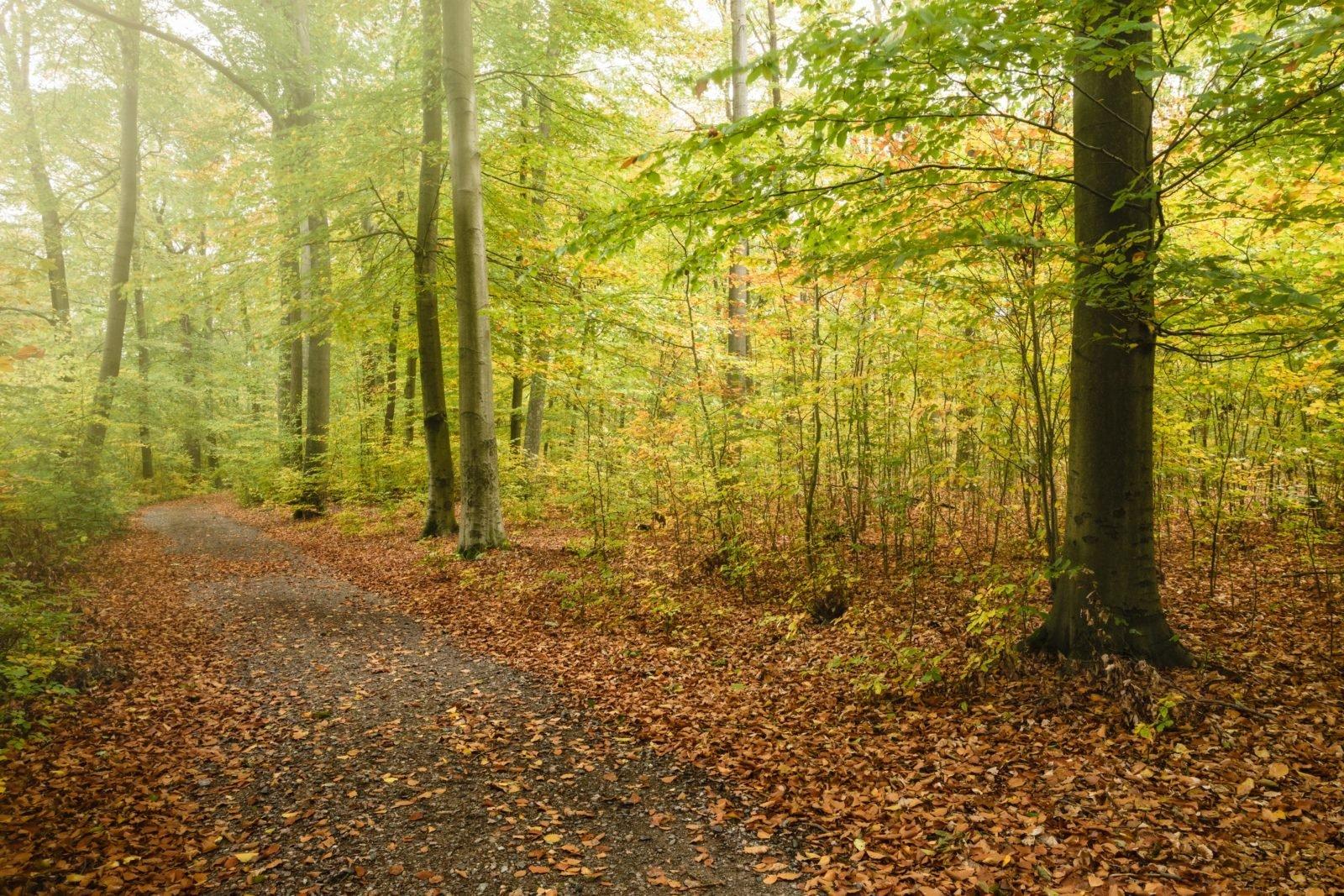 Der Blick in einen herbstlichen Wald: Die Blätter der Bäume sind noch grün und teils gelb, auf dem Boden liegt schon jede Menge Laub. Quer durch das Bild verläuft ein Trampelpfad.