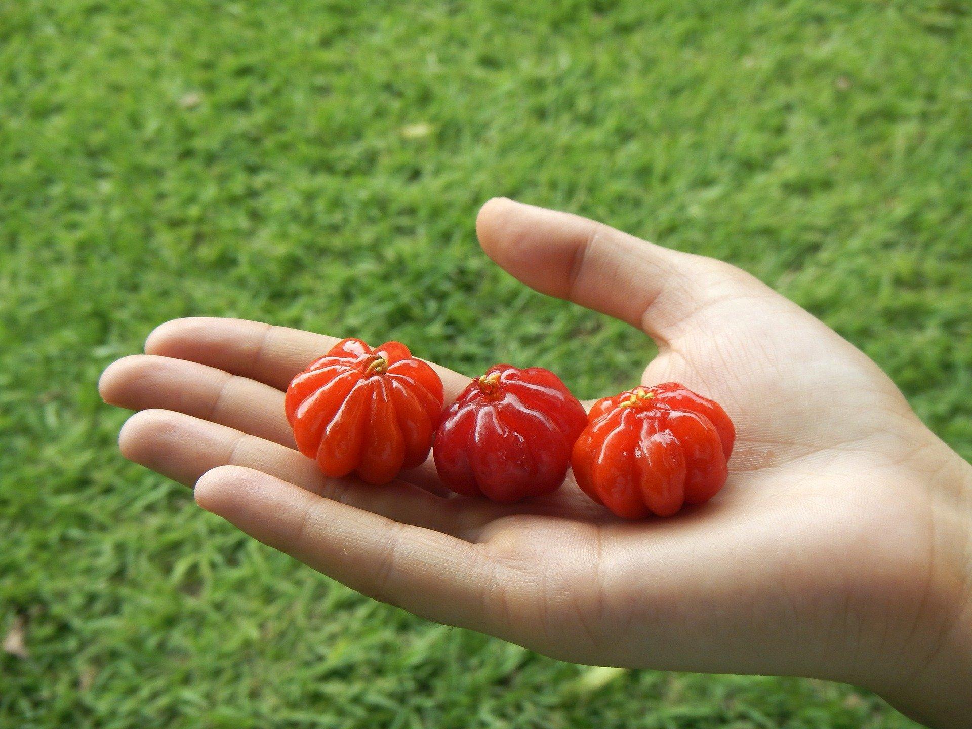 Eine Hand auf der drei Pitangafrüchte liegen.
