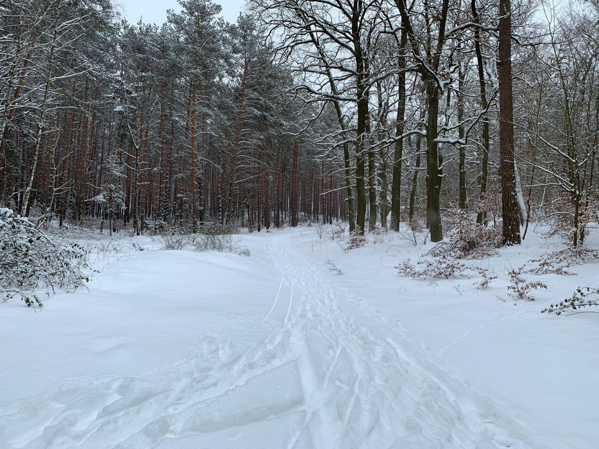 Ein schneebedeckter Waldweg.